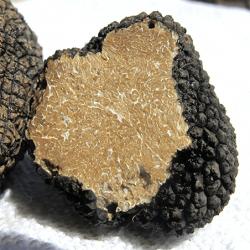 Coupe d'une truffe . Truffe noir du Périgord. Truffe de Bourgogne. Nos Saveurs de France .