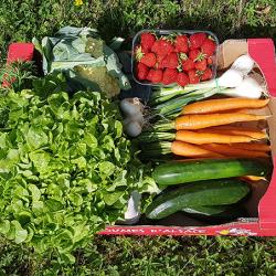 Petit panier de Légumes fruits d'Alsace. Locavore. Nos Saveurs de france