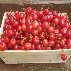 Les cerises d'Alsace. Nos Saveurs de France