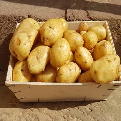 Pomme de terre Nouvelle Cultivée en Alsace Nos Saveurs de France