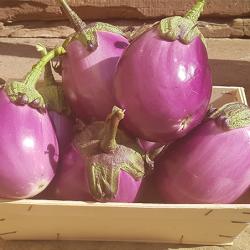 Aubergine Ronde Violette. Nos Saveurs de France,Légumes d'été pour plancha