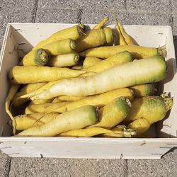 panier de carotte jaune, Nos Saveurs de France