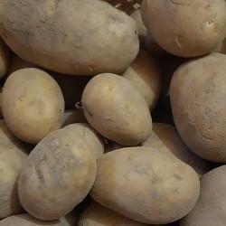 Pomme de terre Marabel de la Ferme Muller