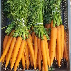 Les carotte fanes