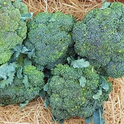 Brocoli legumes d'hiver . Chou. Nos Saveurs de France
