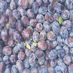 Quetsches d'Alsace, un joli fruit typiquement Alsacien