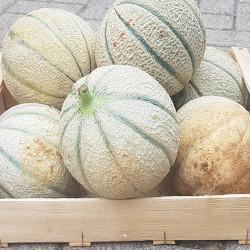 En Alsace le Melon Charentais . Nos Saveurs de France