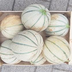 Melon Charentais en Alsace. Nos Saveurs de France